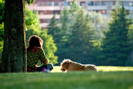 Dog parks near my location